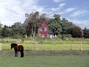 Reetdach Haus in - Schleswig                                   Holstein