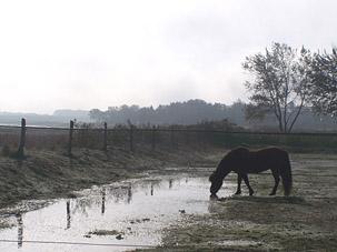 Morgenidylle mit Pferd -                                   Schleswig Holstein