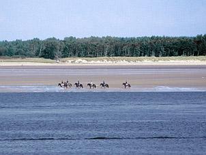 Reiter am Strand - Schleswig                                   Holstein